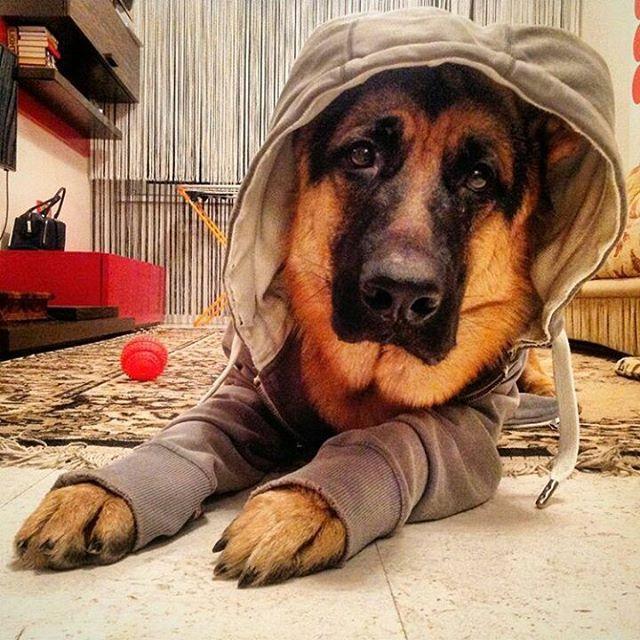 Собака - Друг человека | Собаки
