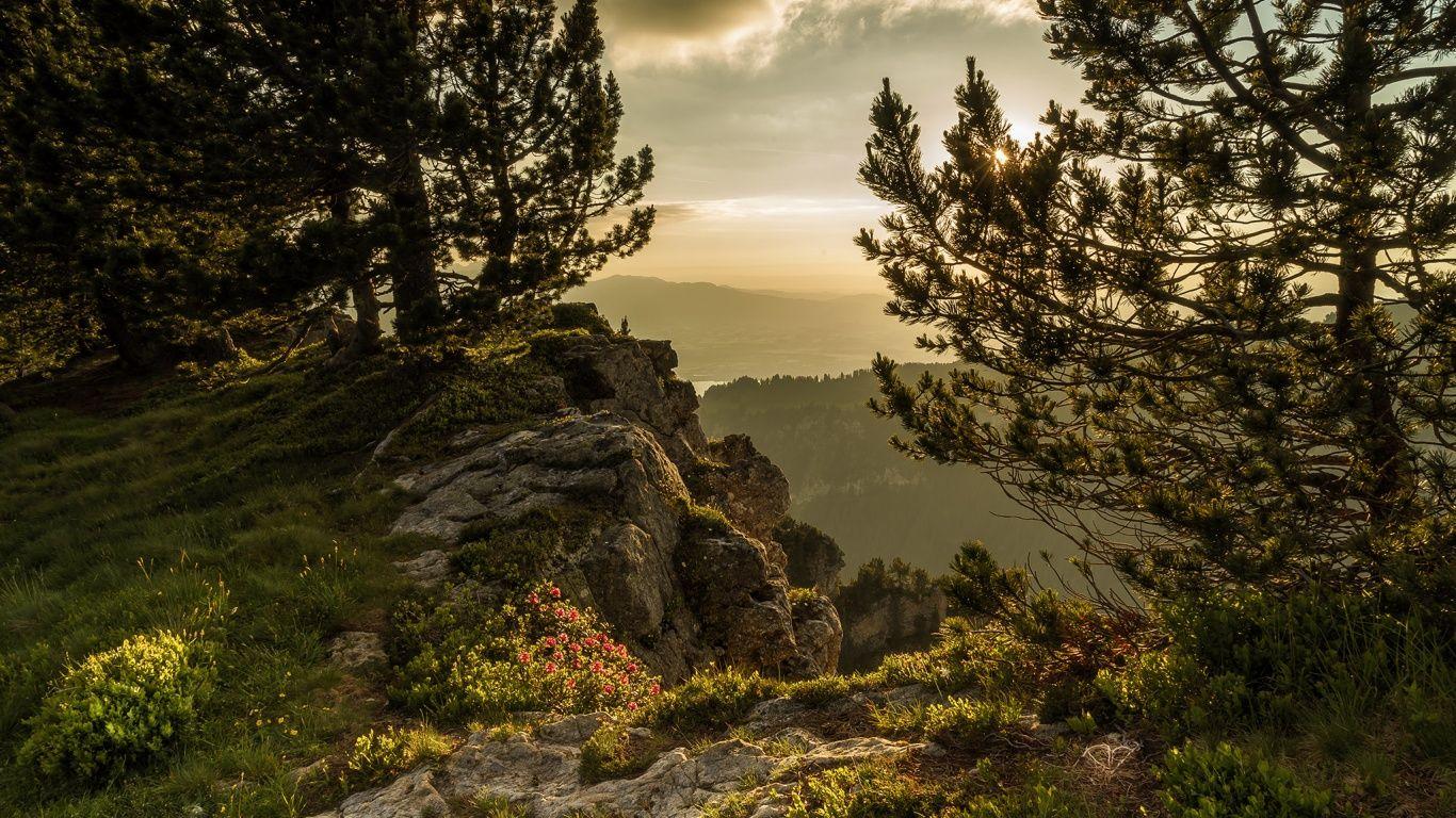 Обои швейцария, гора Нидерхорн, Mount Niederhorn, alps, Switzerland, альпы. Природа foto 6