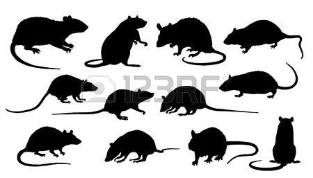 Ratta Silhuetter Pa Vit Bakgrund Rat Silhouette Rats Background Vector Art