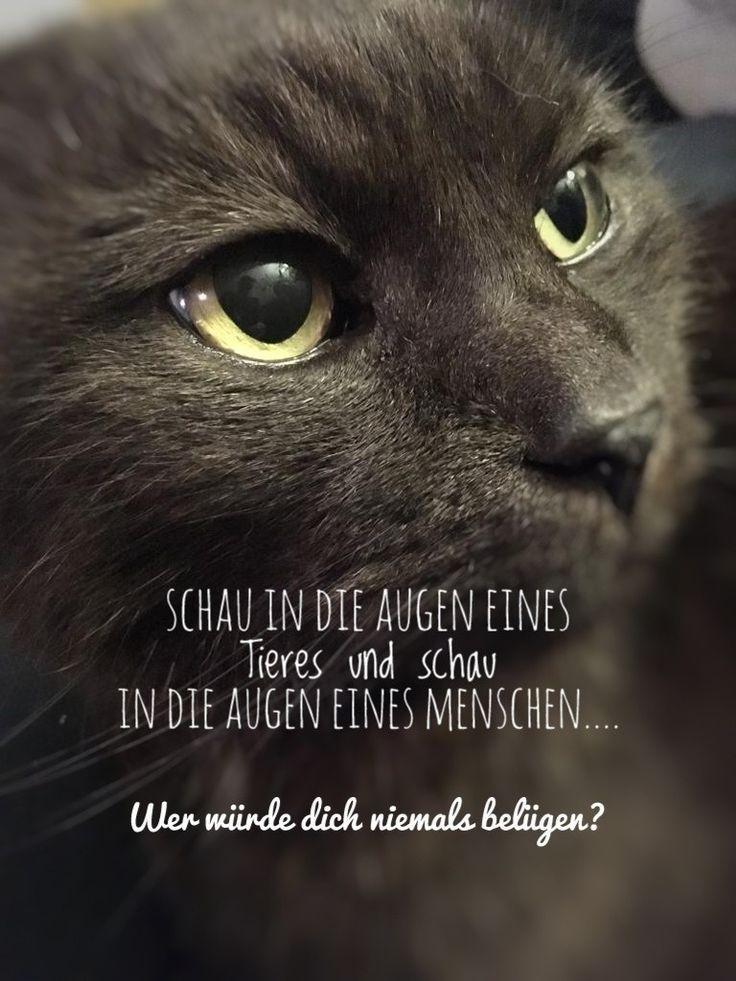 Pin Von Eileen A Auf Katzen Katzen Lustige Sprüche