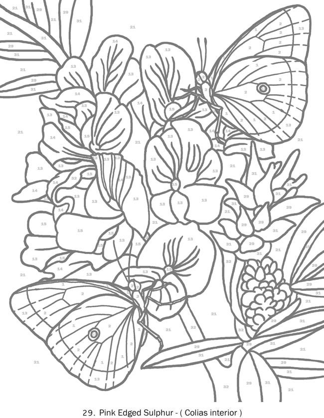 Creative Haven Butterflies Color By Number Coloring Book Butterfly Papillon Mariposas Vli With Images Butterfly Coloring Page Pattern Coloring Pages Fairy Coloring Pages