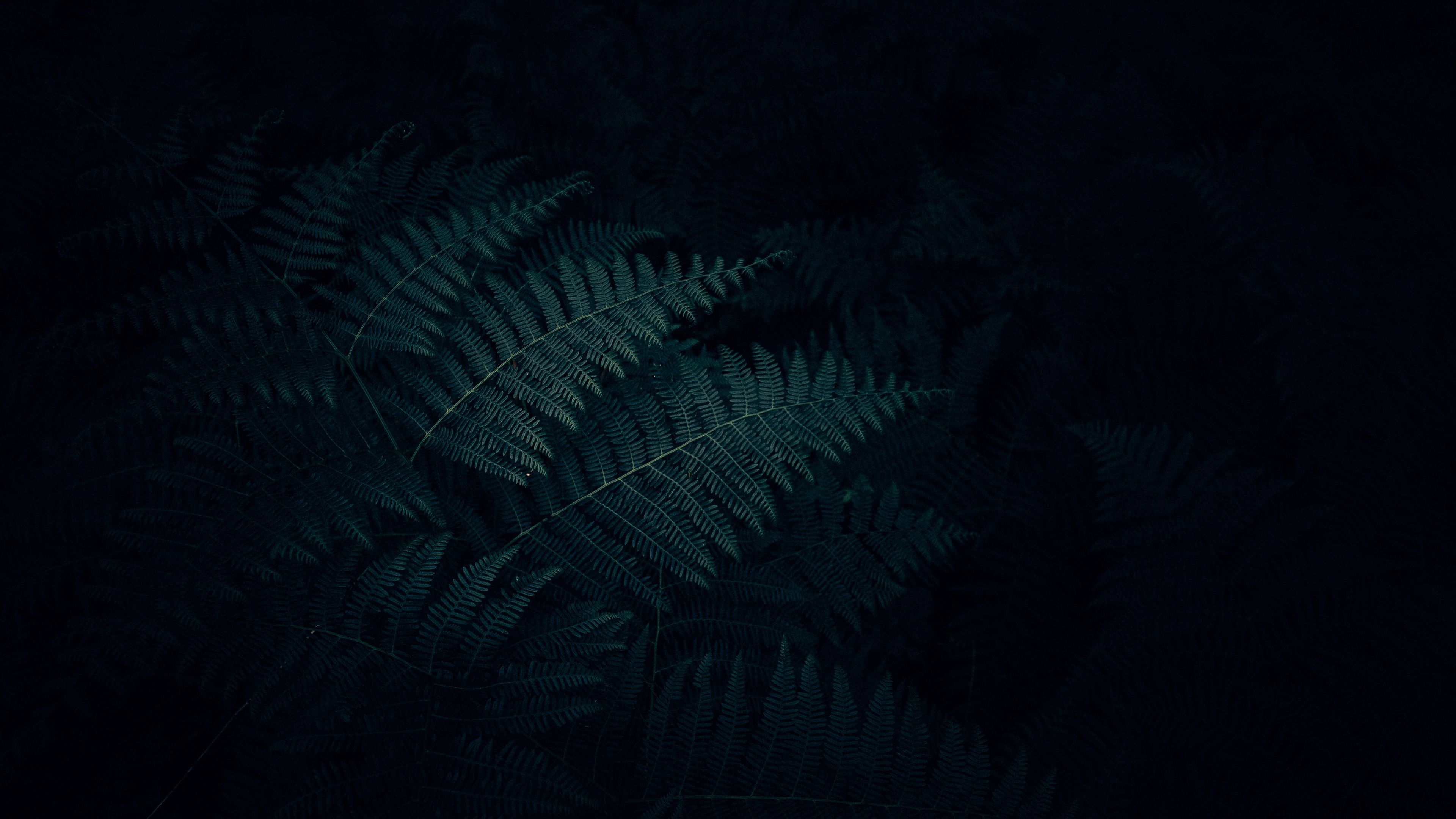 Fern Leaves Plant Dark Carved 4k Plant Leaves Fern Dark Wallpaper Carving Nature Wallpaper