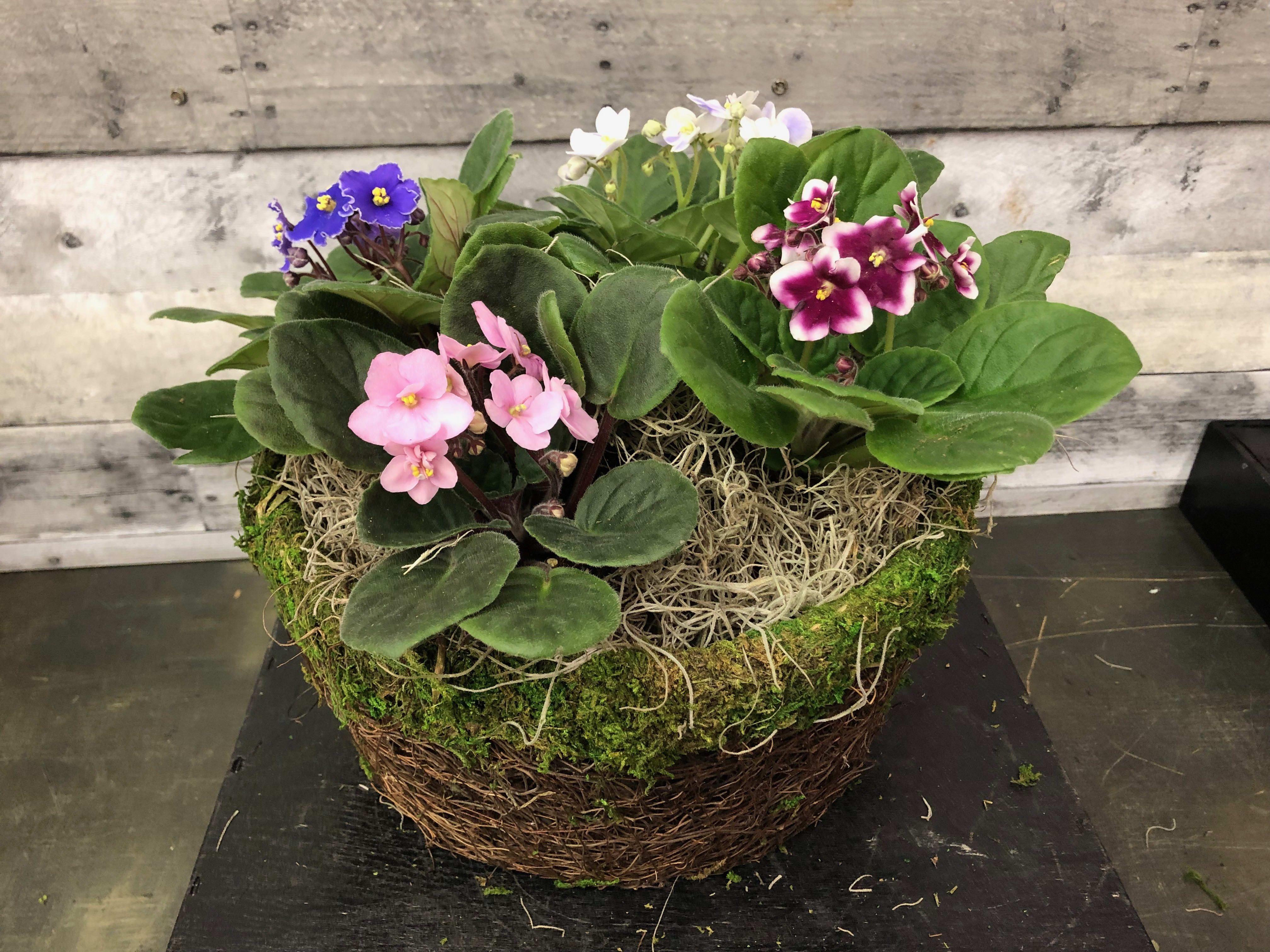 African Violet Basket in McLean, VA Flowers & Plants