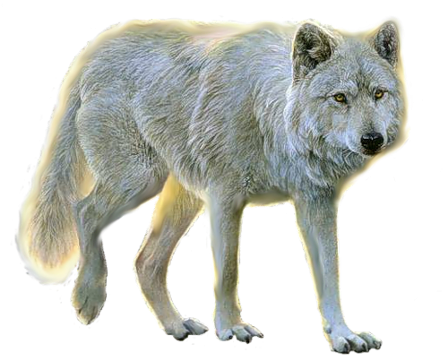 wolf png image, picture, download Animales png, Animales