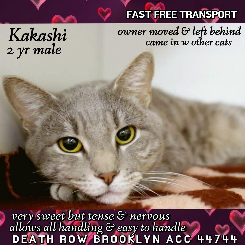 catsrangels2 🐈🌸🌷🐶🍂 ️🍁 on Cats, Animal rescue, Happy pictures