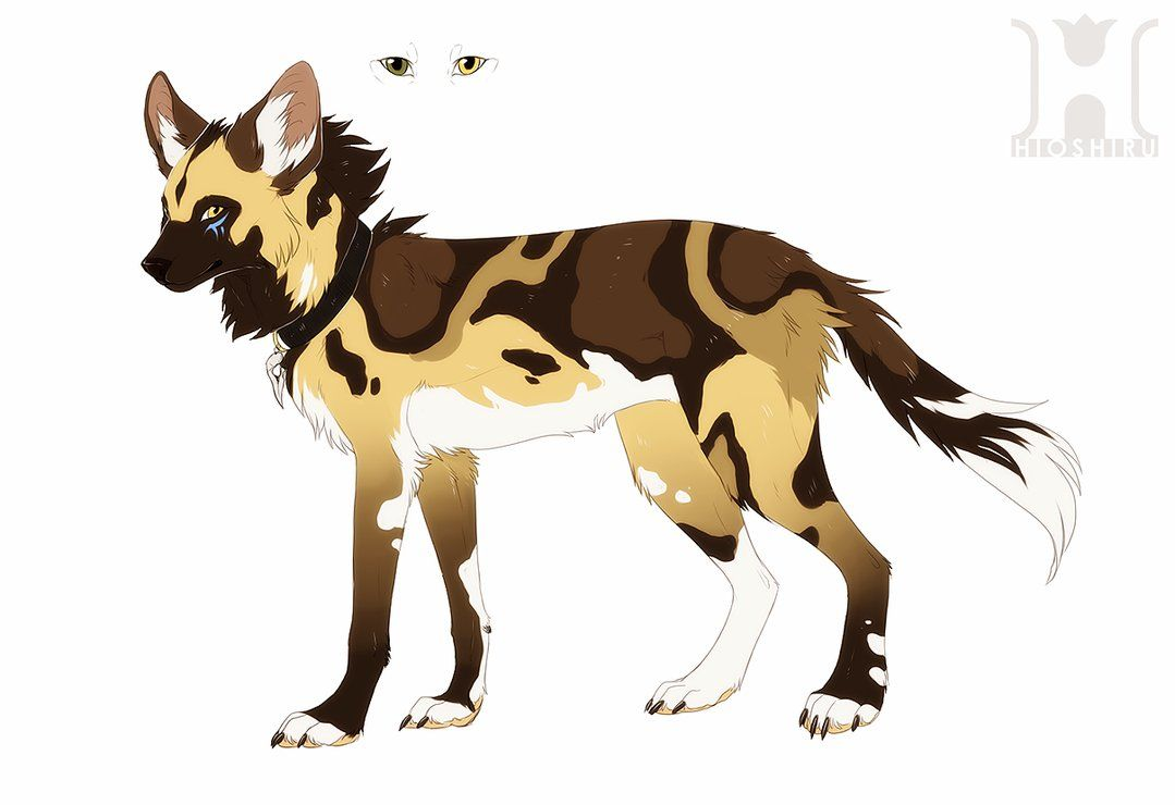 Dog anatomy african wild dog hyena dog design maned wolf anime