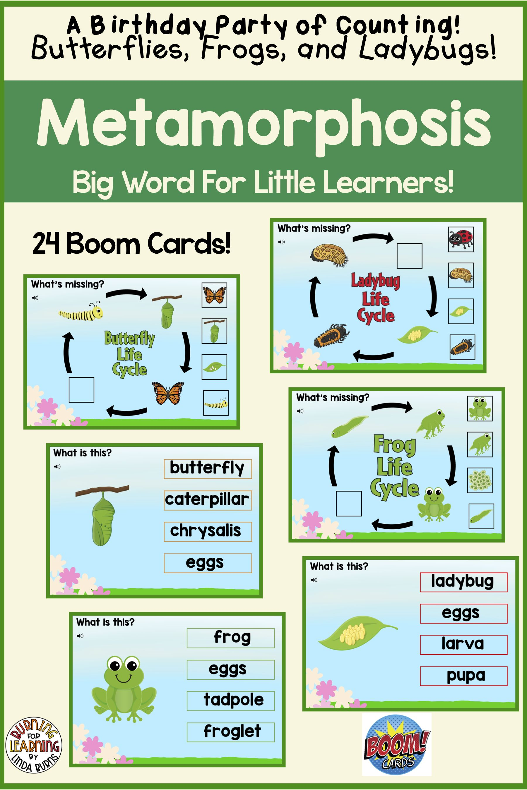 Metamorphosis With Boom Cards Your Kindergarten And First