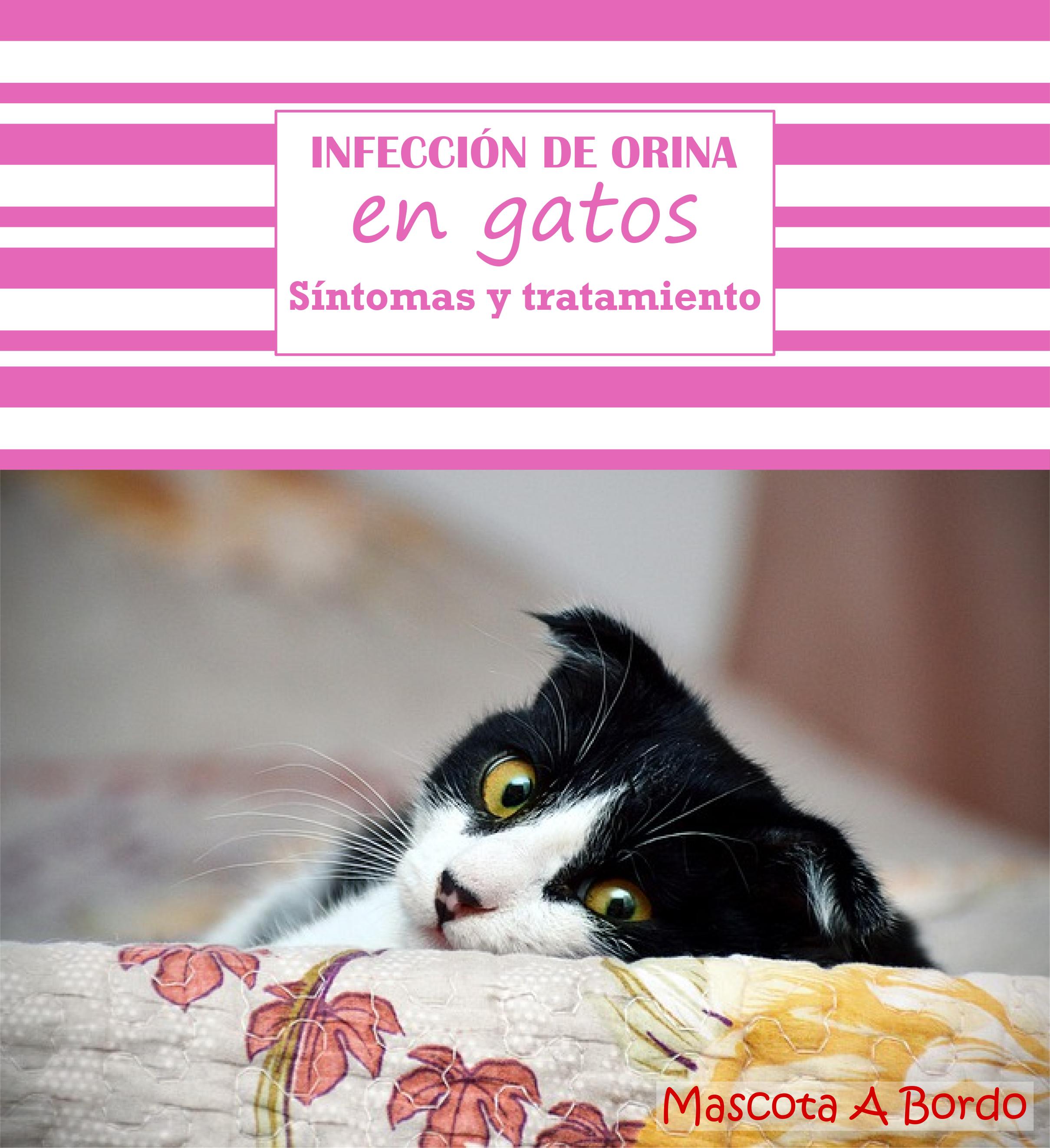 el gato tiene una infección de vejiga