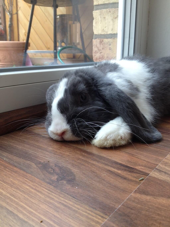 Kaninchenstall selber bauen - Bauanleitung für die Wohnung | Animal