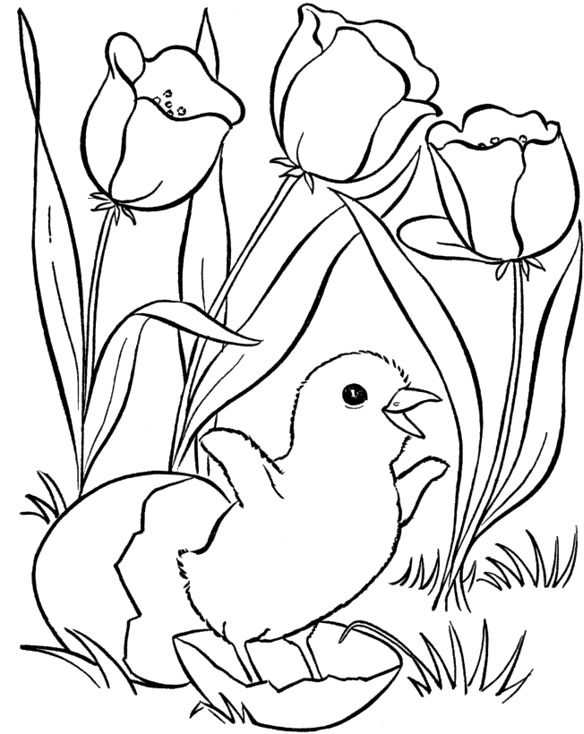 Spring Flowers Coloring Book Pages  Spring coloring sheets