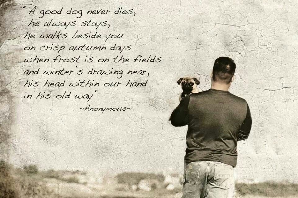 When A Dog Dies Quotes Quotesgram: Dog Loss Quotes. QuotesGram