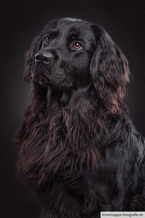Espectaculares fotografías de perros de Daniel Sadlowski - barkinews.com