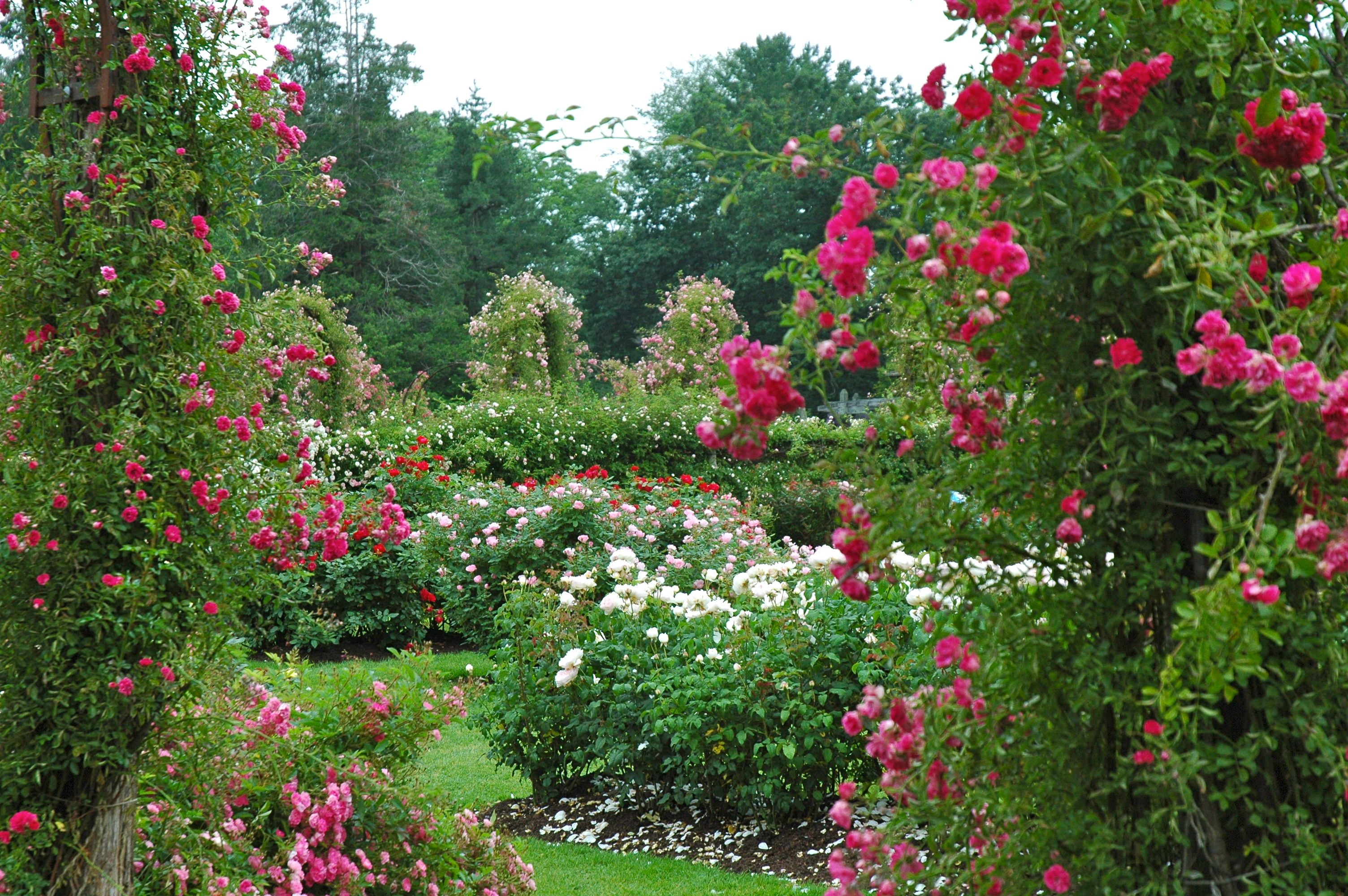In Full Bloom Right Now The Two And Half Acre Garden Boast Roses Of All Colors And Sizes Covering Arched Wal Rose Garden Design Colorful Garden Garden Design