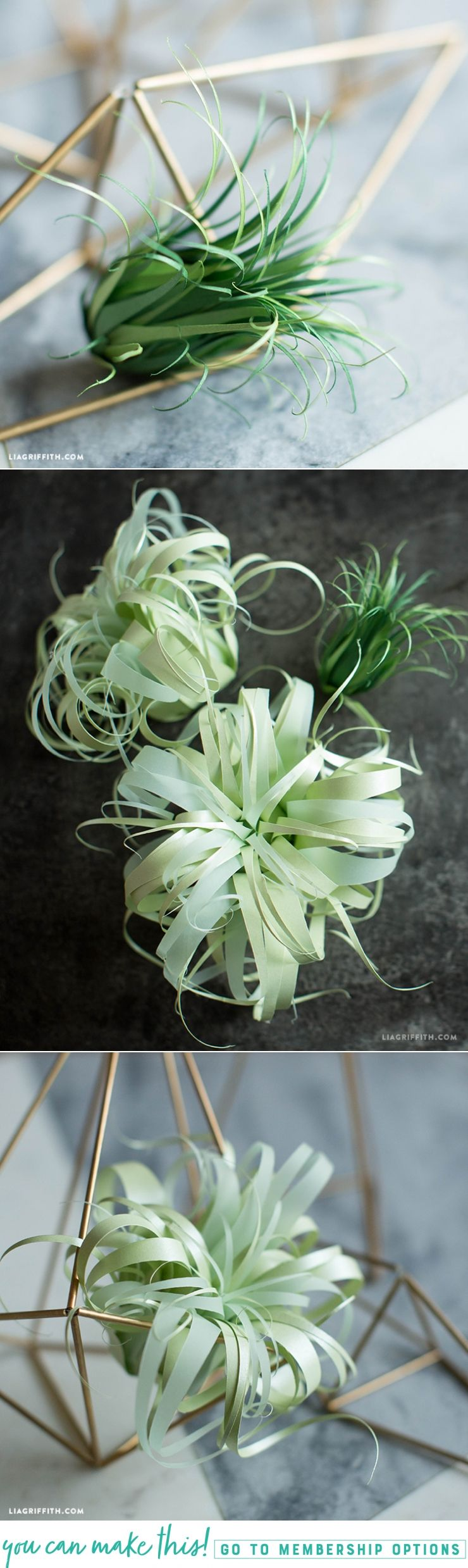 Vellum paper air plants tutorials patterns and flowers vellum paper air plants mightylinksfo