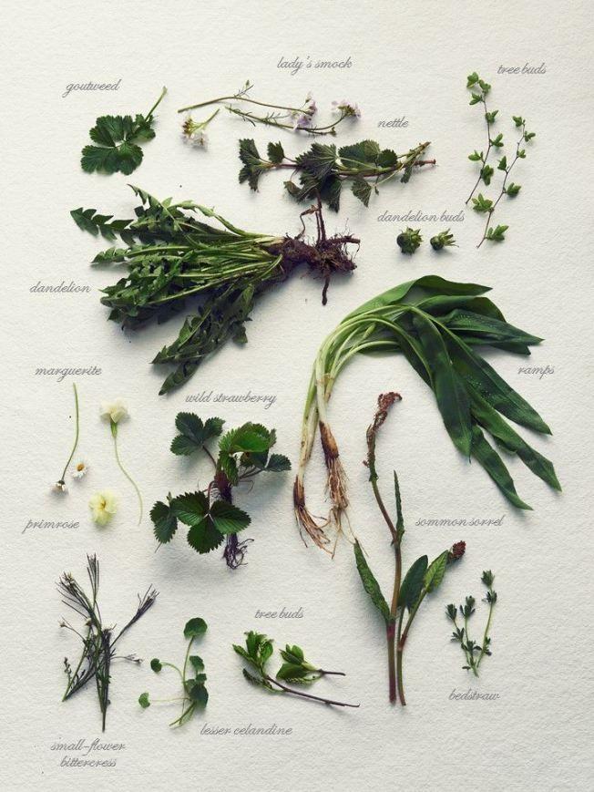 Herbier plantes sauvages comestibles recettes - Cuisine plantes sauvages comestibles ...