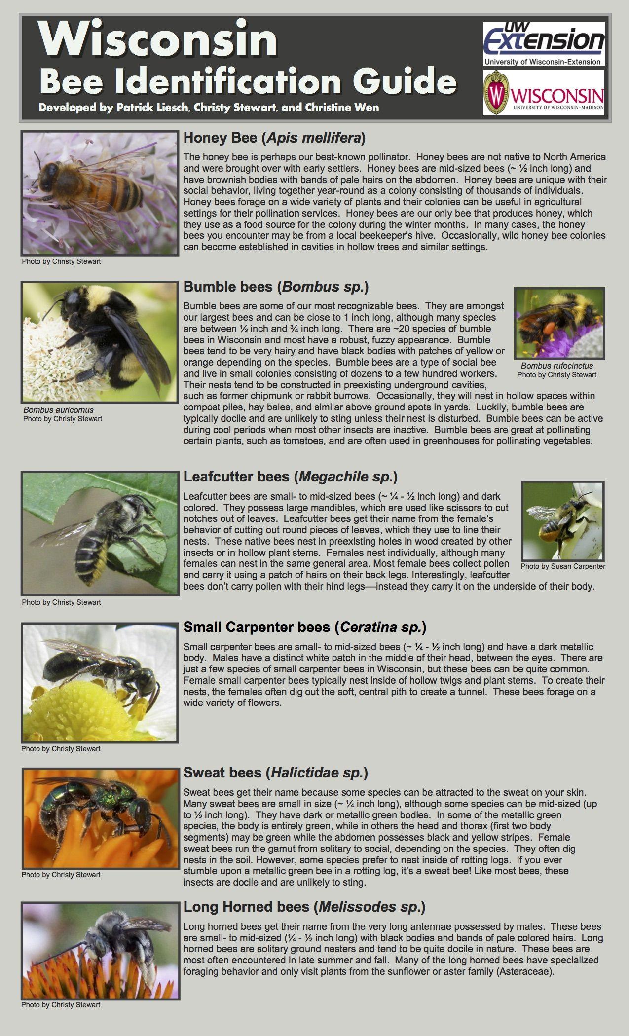 Wi Bee Identification Guide 2017 2 Jpg 1275 2100 Habitat