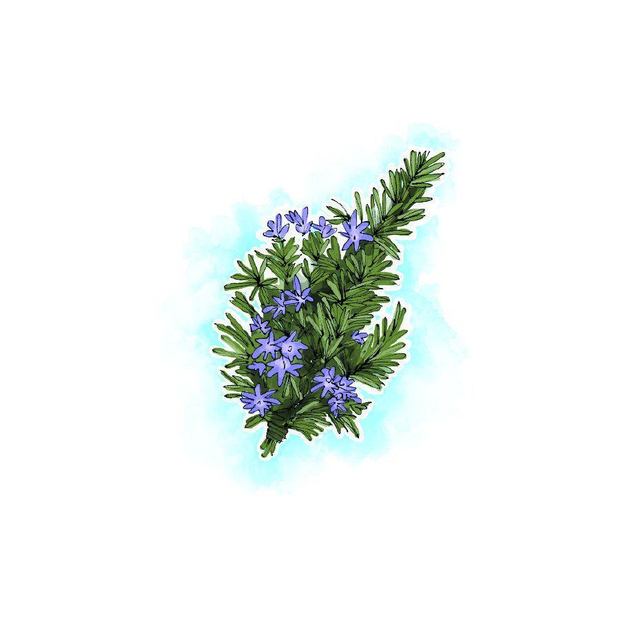 Conheça as plantas que estimulam a função cerebral e ajudam a prevenir o aparecimento de doenças neurológicas. João Beles, naturopata e professor no Instituto de Medicina Tradicional de Lisboa, explica quais são
