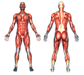 Info on sports injuries, rehab, stretching, strengthening