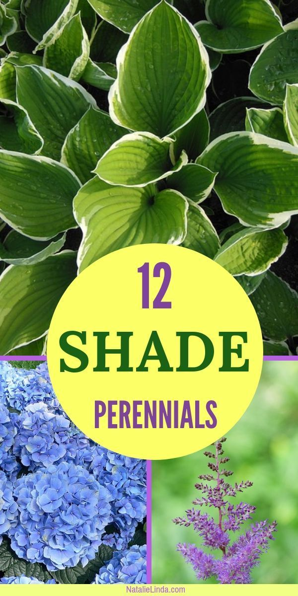 12 Shade Perennials that Will Beautify Sheltered Areas of Your Yard -   13 plants design layout ideas