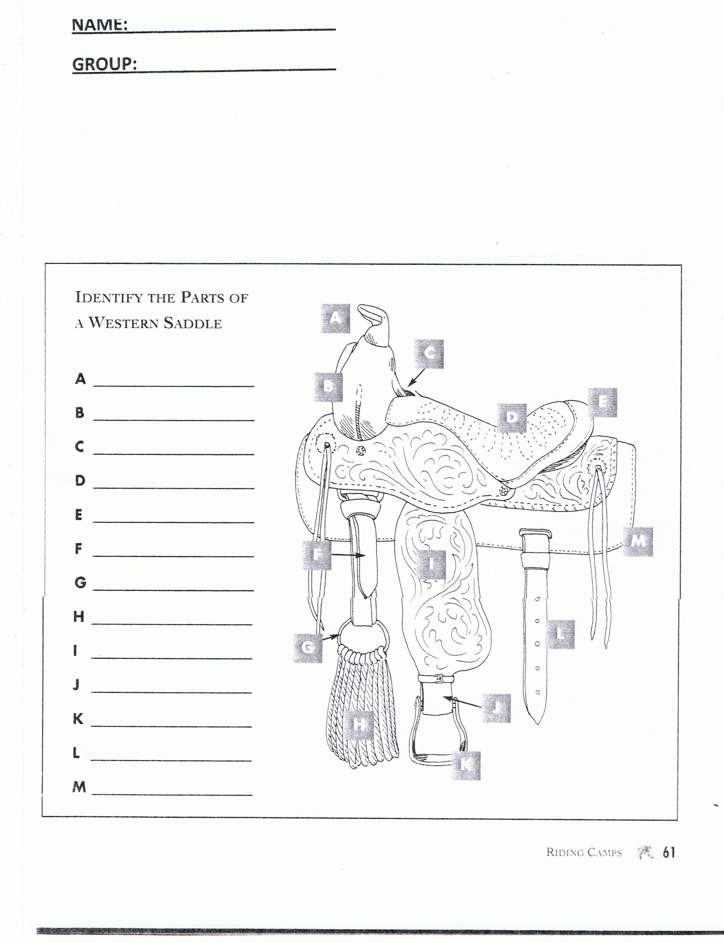 Worksheet Part Of Saddle