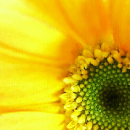 piyocamera yellow