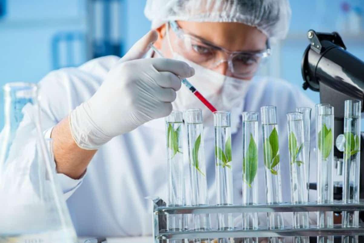 Freshers Syngene Research Jobs MSc Biotech & Biochem