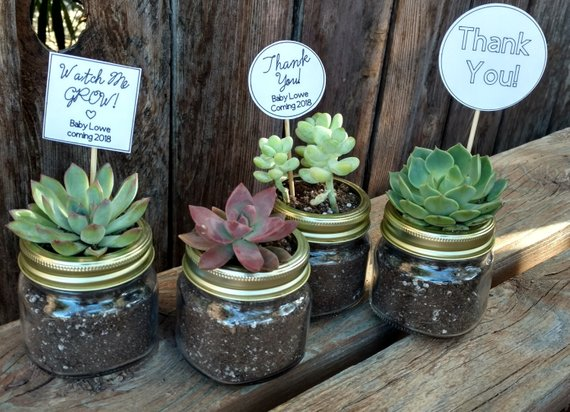 Wedding Gifts For Guests 20 30 Mini Mason Jar Diy Succulent Favors Bridal Shower W In 2020 Baby Shower Gifts For Guests Baby Shower Favours For Guests Mason Jar Diy
