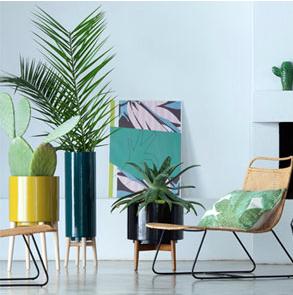urban jungle plante verte d 39 int rieur et cache pot d co ambiance tropicale pinterest. Black Bedroom Furniture Sets. Home Design Ideas