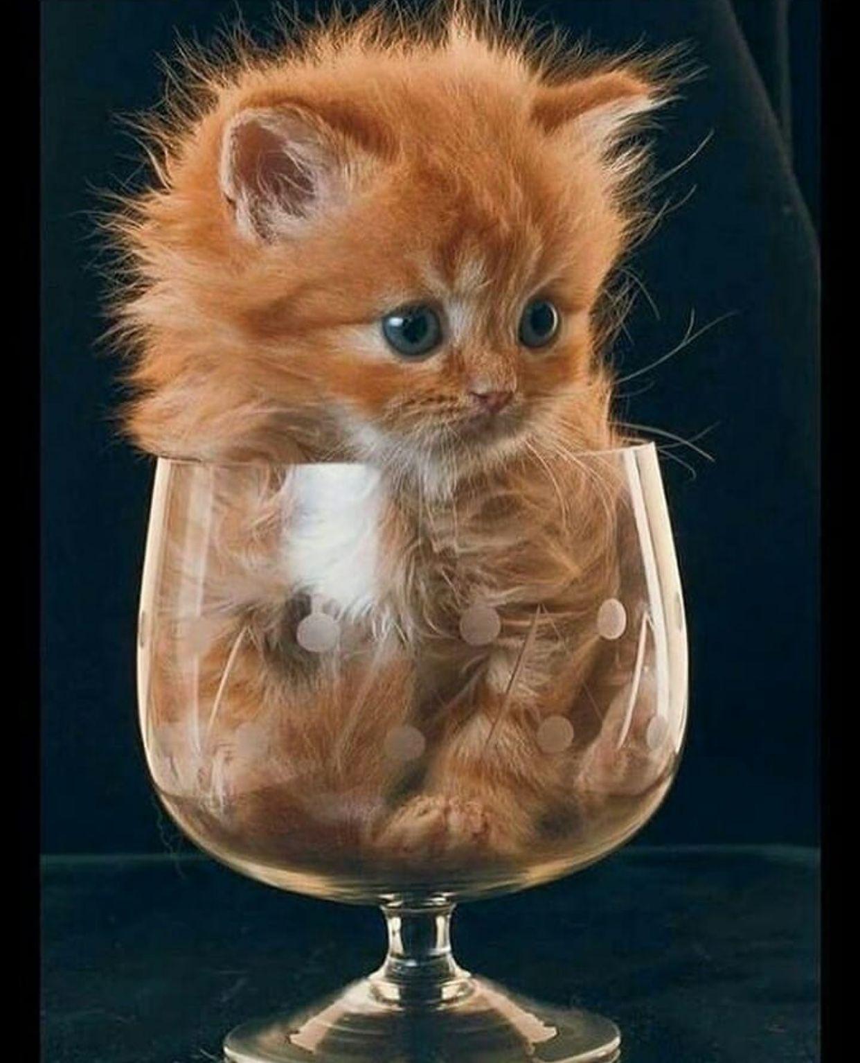 Pin by Kayo Tamimi on Cute animal Cute cats, Cute