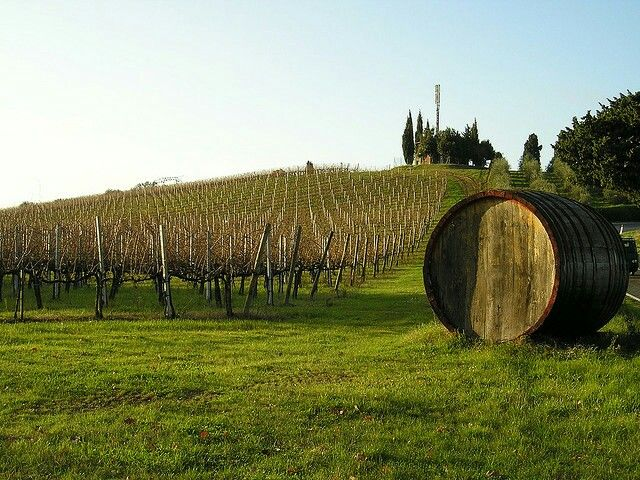 On the hill of Chianti vineyard
