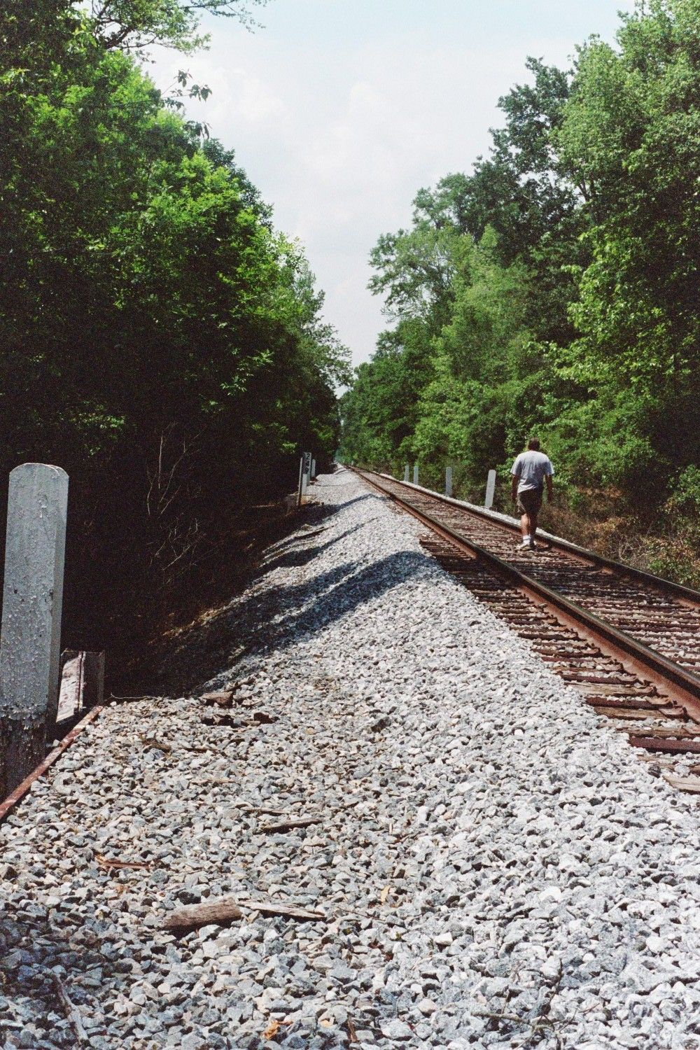 Another shot of the railroad bed in Twiggs County near
