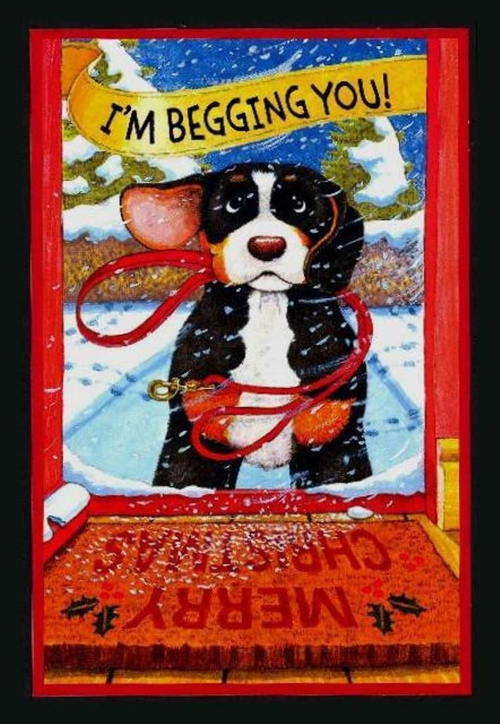 315GC BERNESE MOUNTAIN DOG Unused Christmas Greeting Card