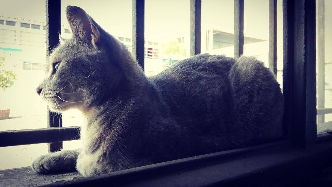"""""""Por supuesto que se puede querer más a un gato que a un hombre. De hecho el hombre es el animal más horrible de la creación."""" - Brigitte Bardot.  #cat #catsagram #catstagram #instagood #kitten #kitty #kitten #photooftheday #catsofinstagram #ilovemycat #instagramcats #nature #catoftheday #lovecats #furry #lovekittens #adorable #catlover #instacat #locadelosgatos #gattara #crazycatlady #catlady by __nataliavictoria"""