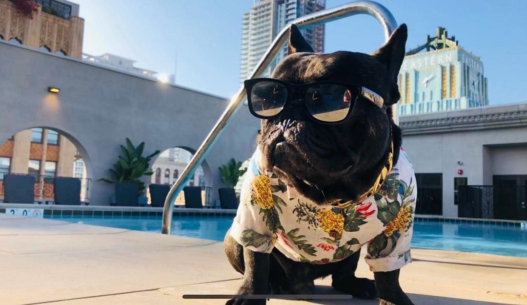 Frenchie World Hawaiian Shirts Dog Has Diarrhea Dog