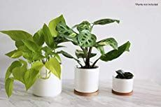 Top 10 Plant Pot For Indoors Of 2019 Best Reviews Guide