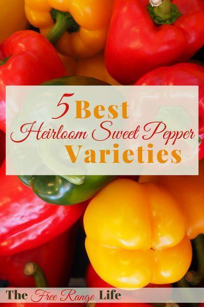 Best Heirloom Sweet Pepper Varieties To Try This Year Stuffed Peppers Stuffed Sweet Peppers Gardening For Beginners