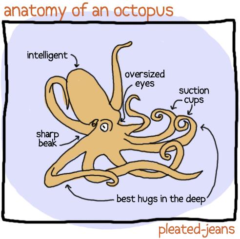 Anatomy Of A Octopus Best Hugs In The Deep Hugs Pinterest