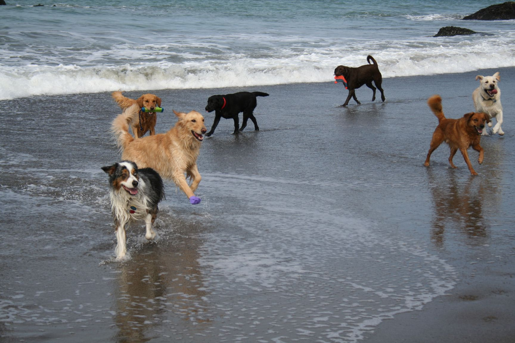 Playing with our dog friends on Cayucos Beach