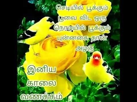 Birthday Song In Tamil À®ª À®±à®¨ À®¤à®¨ À®³ À®µ À®´ À®¤ À®¤ À®ª À®Ÿà®² Youtube Birthday Songs Love Good Morning Quotes Good Morning Messages