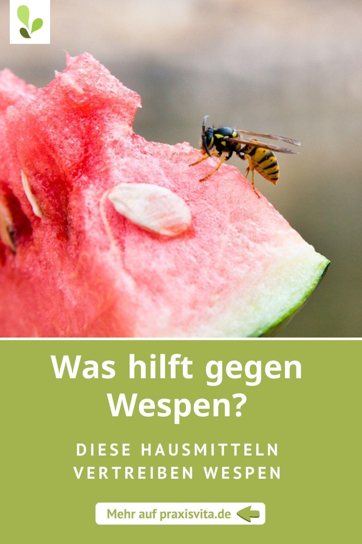 Wespenstich Was Hilft