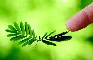 Excellent Article about plants neurobiology
