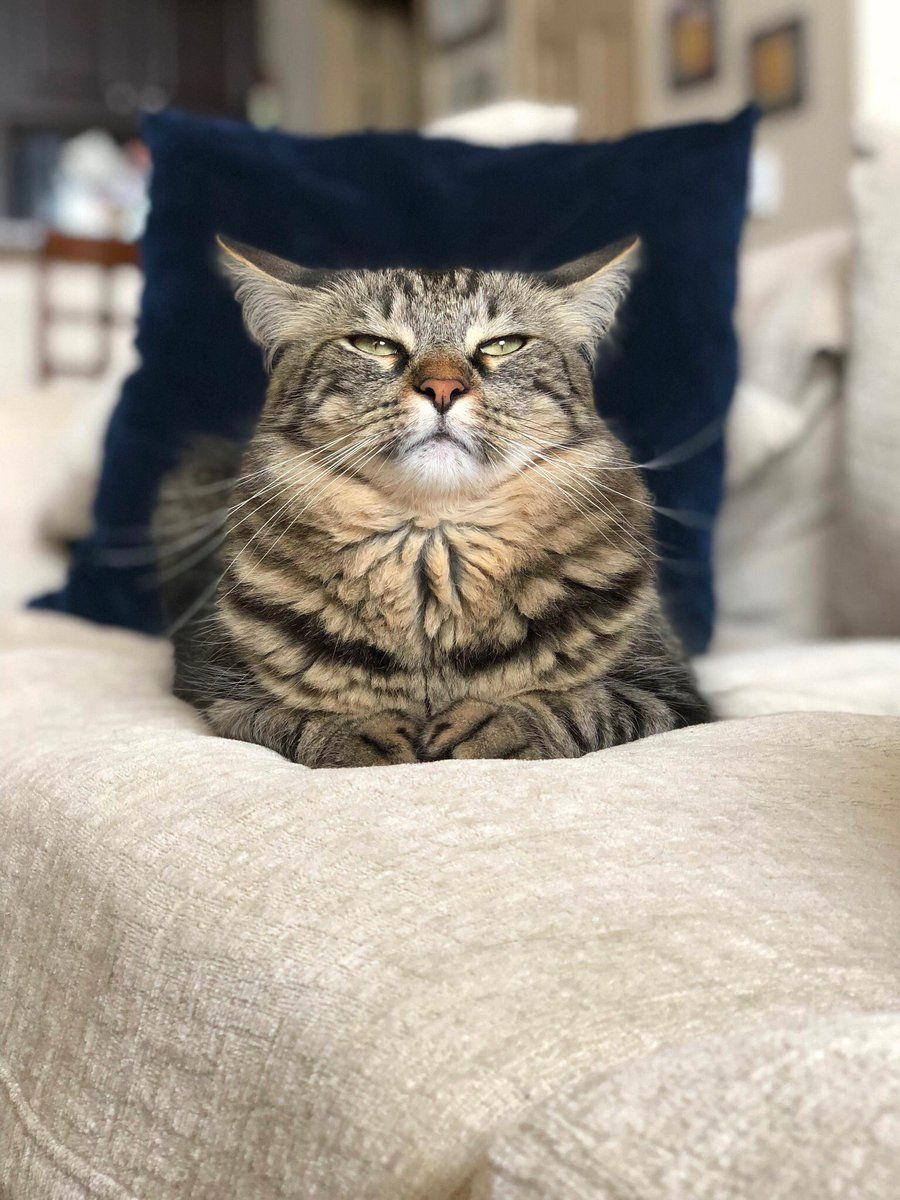 Tora On Cats Pretty Cats Kittens Cutest