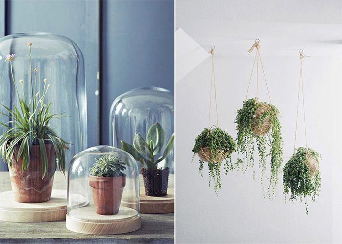 La Succulente Plante Grasse Plantes Grasses Plante