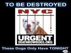 "There will be no At Risk list 10/11/16 and no euthanasia 10/12/16 unless deemed medically necessary by a licensed veterinarian. - - Info Please Share: View tonight's list here: http://nycdogs.urgentpodr.org/tbd-dogs-page/ The shelter closes at 8pm. Go to the ACC website( http:/www.nycacc.org/PublicAtRisk.htm) ASAP to adopt a PUBLIC LIST dog (noted with a ""P"" on their profile) and/or work with a rescue...- Click for info & Current Status: http:/"
