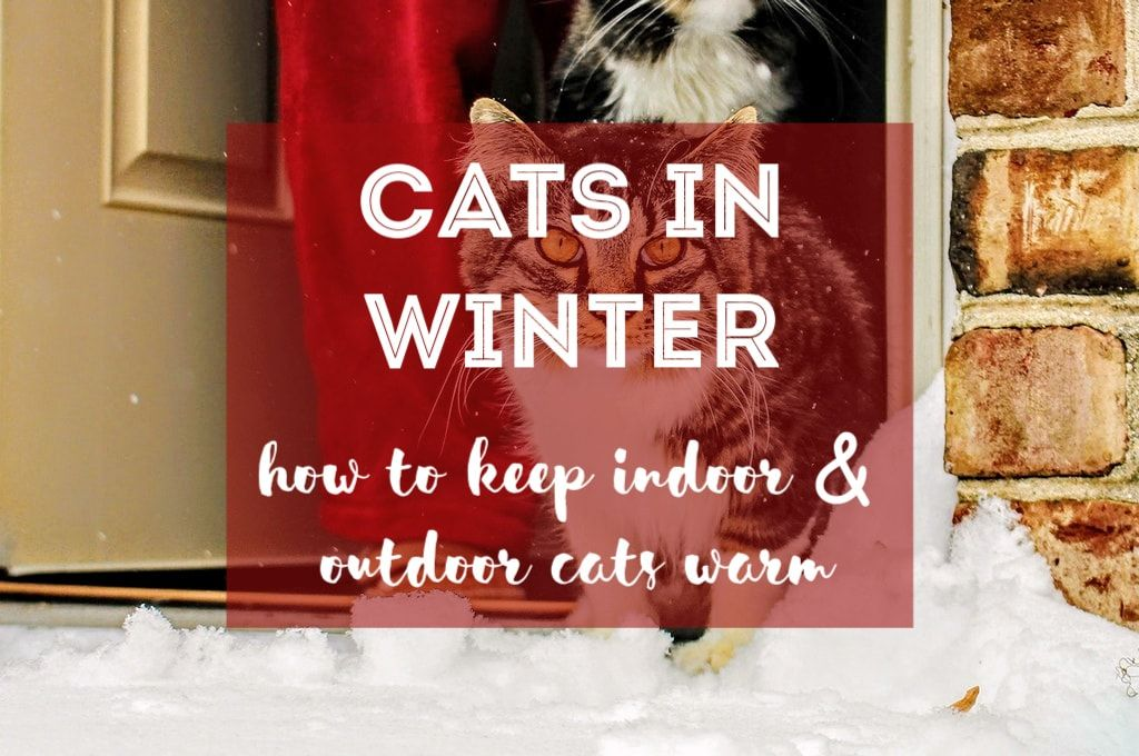 Cats Whether They Live Indoors Or Outdoors Feel The Cold Just Like Humans Do In This Article You Will Learn How To Keep Cats Cat Facts Pet Blog Outdoor Cats