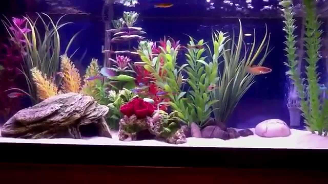 20 Gallon Freshwater Aquarium Freshwater Aquarium Fish Tank Design Fish Tank Decorations
