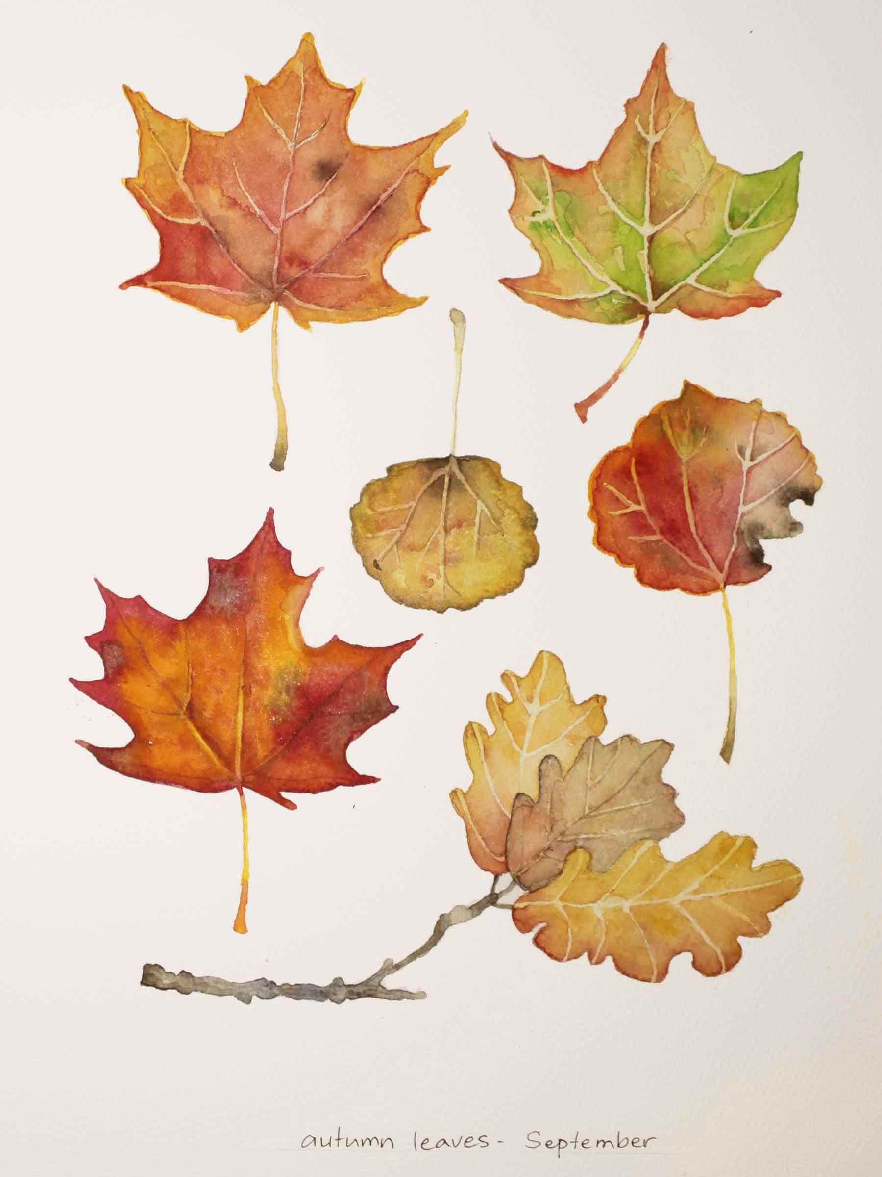 Autumn leaves / Watercolor, Sini Ezer | Hojas | Pinterest ...