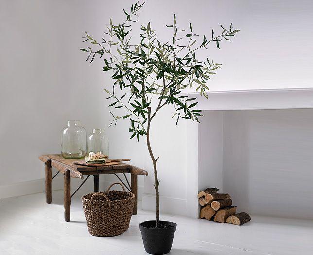 Olive tree bloom interior design pinterest plants for Growing olive trees indoors