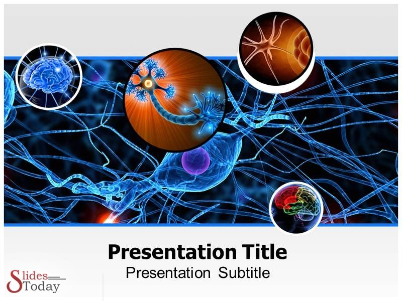 Neurology powerpoint presentation get custom design presentation neurology powerpoint presentation get custom design presentation with http toneelgroepblik Image collections
