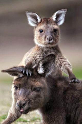 """Please make the ethical choice not to use animals or any of their byproducts. No matter how well they are treated, they are not """"ours"""" to hunt, slaughter, eat, wear, exploit, enslave, etc. PLEASE GO VEGAN! With so many alternatives available, it has never been easier. www.vegankit.com"""